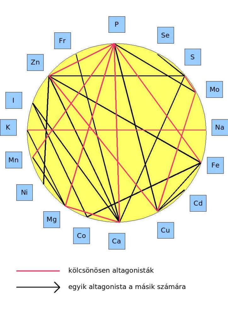 Ásványi anyagok szerveződése a szervezetben.